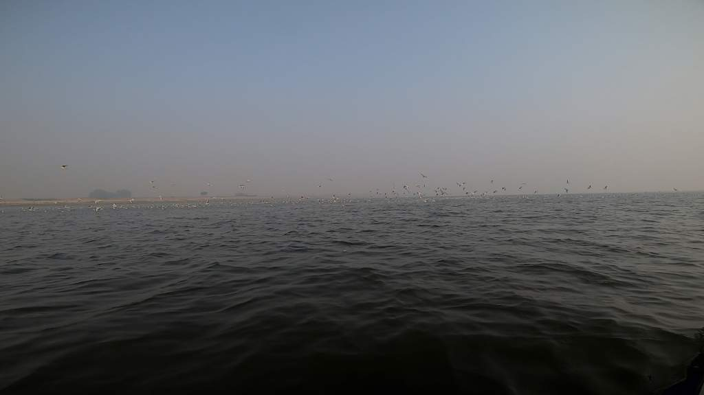 Lots of birds at Kaithi