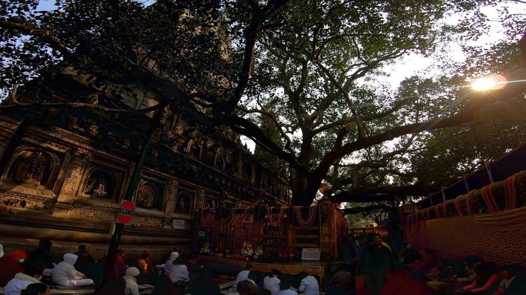 Another view of the Bodhi Tree